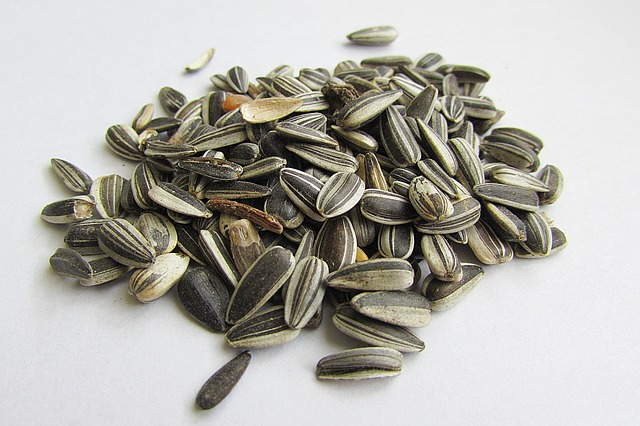 Sunflower Seeds the foods to eat in winter