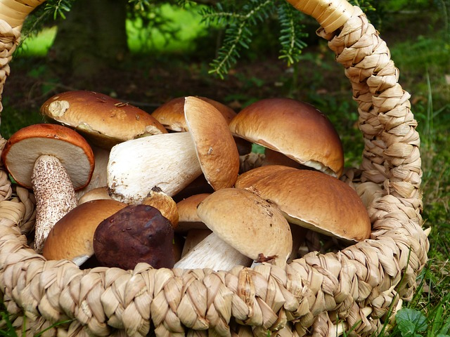 Mushroom helps during cold and cough
